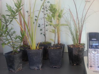 Small grade plants for sale
